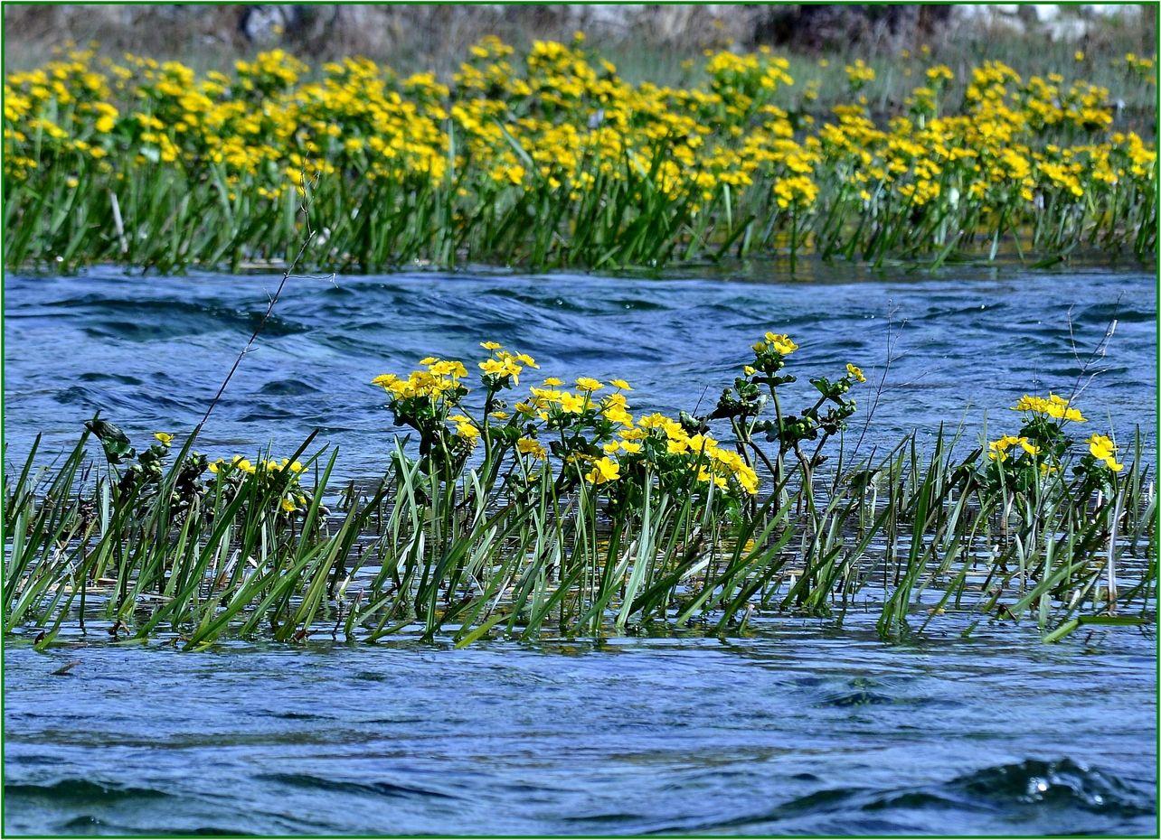 2. ...ovi kadrovi su potvrda da je proljeće stiglo...blizu izvora Cetine .....
