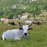 Netaknuta priroda podno planine Kamešnice