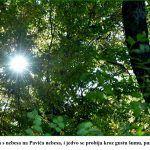 Sunce udara s nebesa na Pavića nebesa i jedvo se probija kroz gustu šumu punu čistog zraka x
