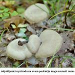 Strpljivi zaljubljenici u prirodu na ovom području mogu susresti razne vrste gljiva x