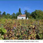 Padine Pavića nebesa oplemenjuju vinogradi voćnjaci i vrtovi x