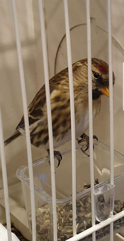 pticari