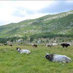 Pogledajte lipote uvjeti za stočarstvo idealni kad bi Država vodila malo bolje računa di bi nam bio kraj