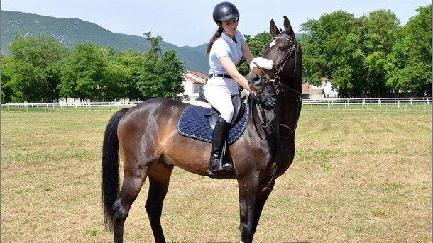 Konjički sport