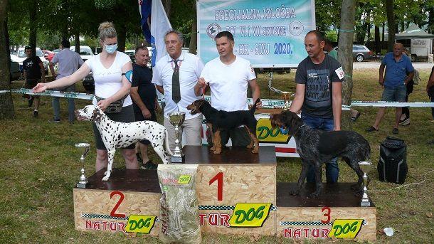najlipši psi izložbe