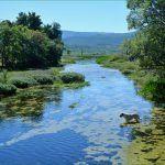 Osjeća životinja gdje je pravo osvježenje i čistoća kršne rijeke Cetine
