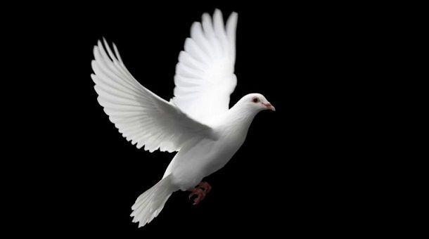 golubica