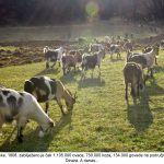 A kad smo već kod stoke zabilježeno je čak ovaca koza goveda na području današnjeg Parka prirode Dinara A danas x