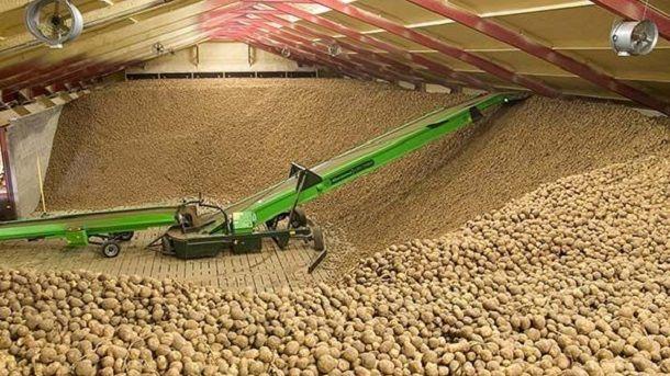 skladiste krumpir